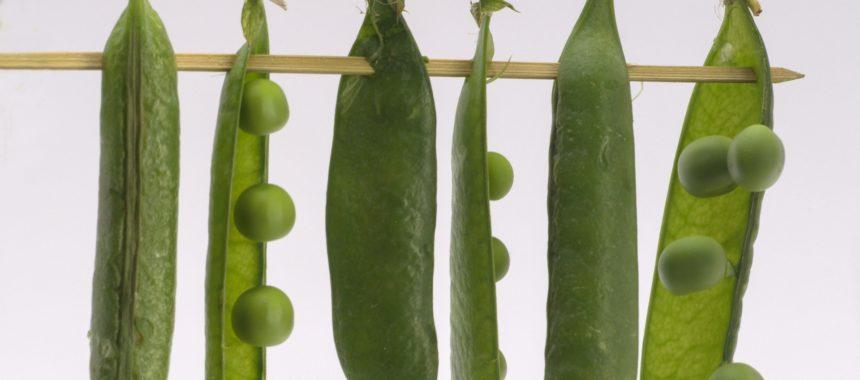 Dlaczego warto jeść warzywa strączkowe?